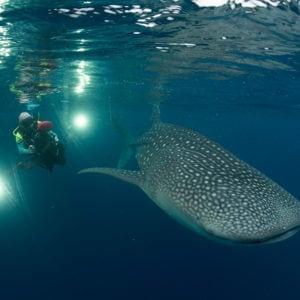 +/- 5 mètres - La série - Episode 4 : Caresser les baleines