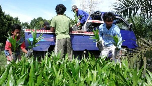 Indonésie : le coût des biocarburants