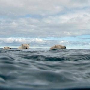 +/- 5 mètres – La série – Episode 5 : Pister l'ours polaire