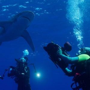 +/- 5 mètres – La série – Episode 3 : Plonger avec les requins