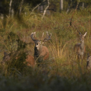 Des Bêtes et Des Sorcières : Les mystères de la forêt