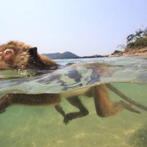 Les singes qui voulaient voir la mer